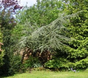 rs-tree-2009