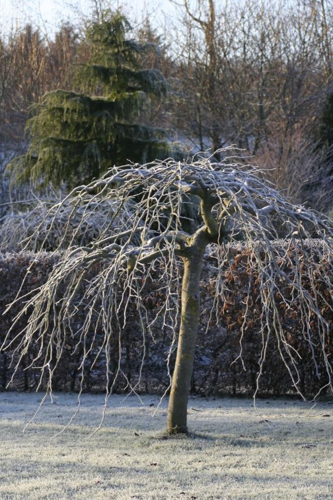December frost