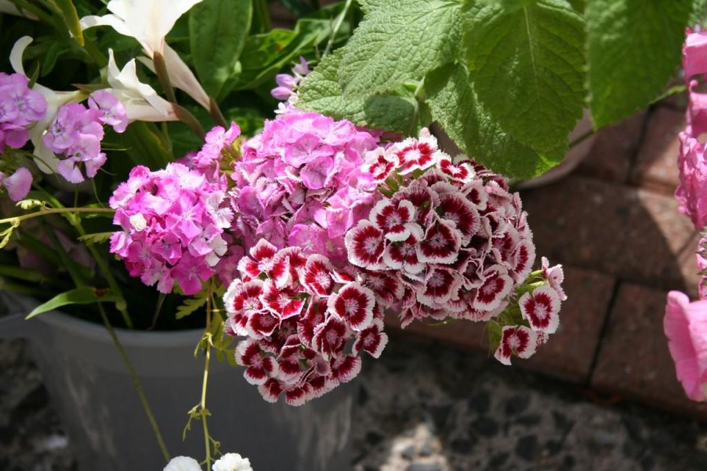 Gail prep scottish cut flowers