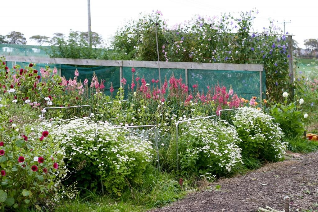 autumn Scottish flower farm