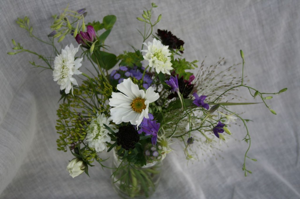 blue and white scottish grown flowers October