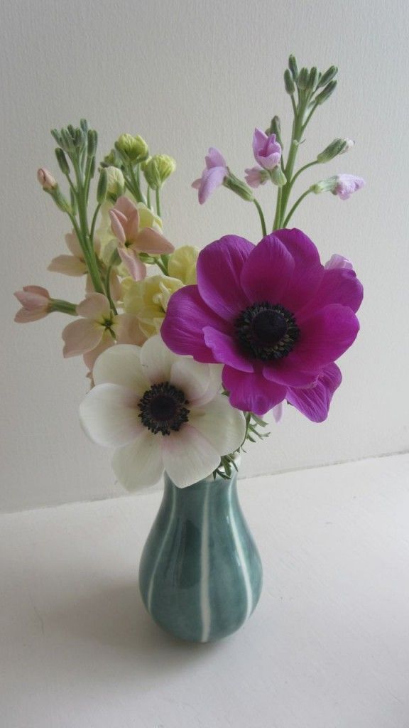 first anemones 2013