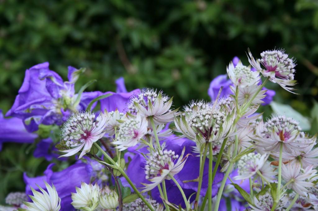 scottish flowers june