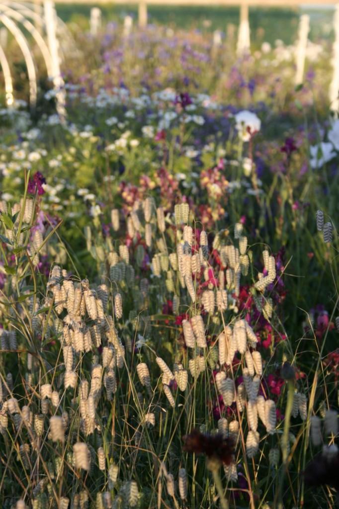 sept cutting garden2