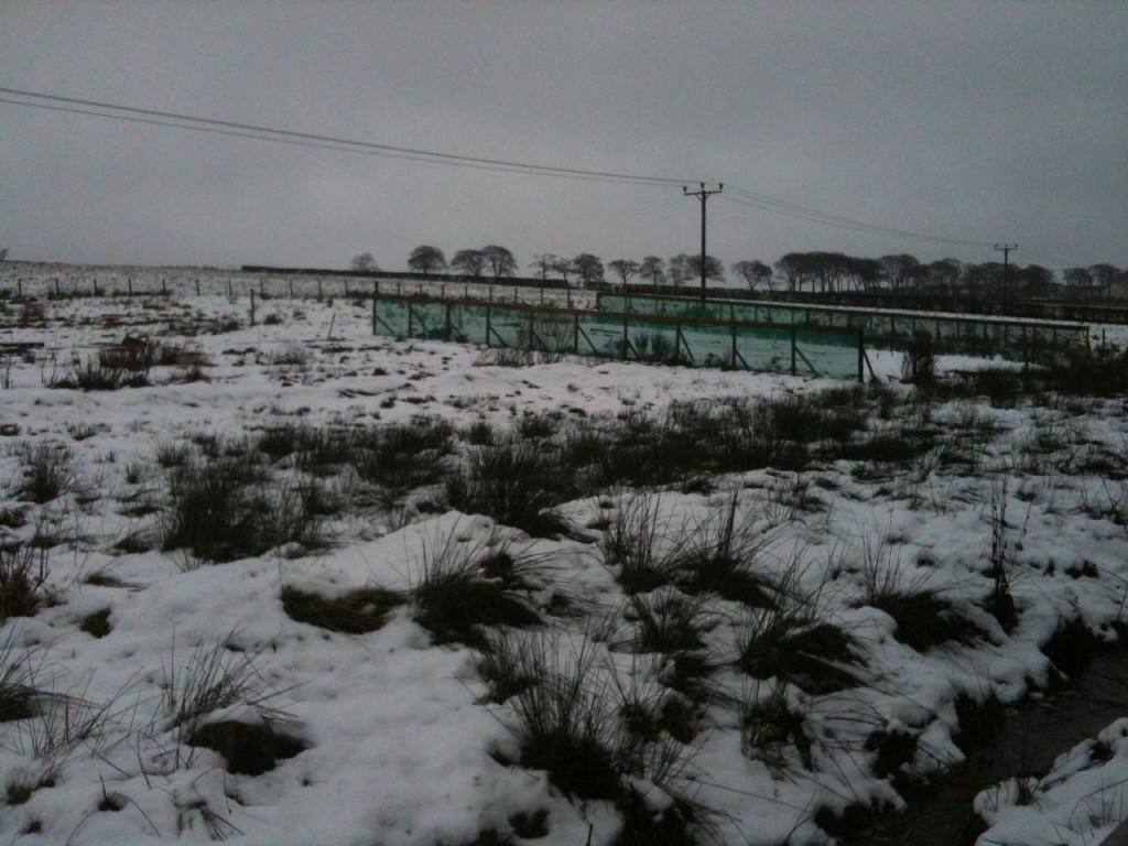 snow covered flower farm